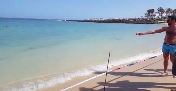 Gran Canaria Haie